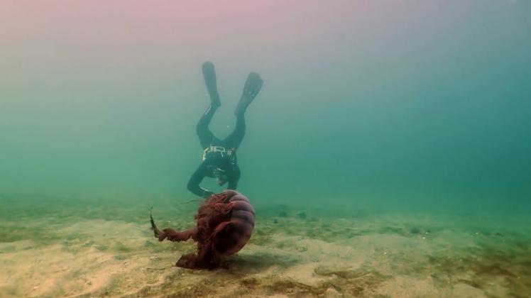 Misterios Submarinos 1
