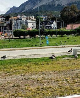 thumbnail_Aves en la avenida Maipu